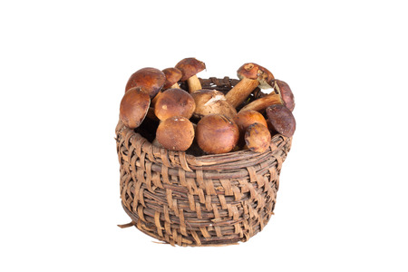 fungous: freshly picked mushrooms in an old wicker basket isolated on white background Stock Photo