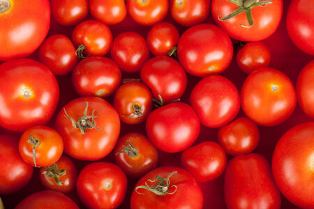 freshly picked tomatoes in a box