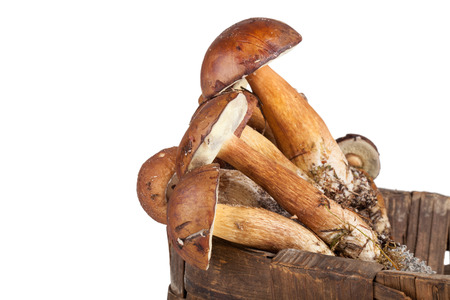 bay boletes lying in a wicker basket isolated on white background. Shallow depth of field photo