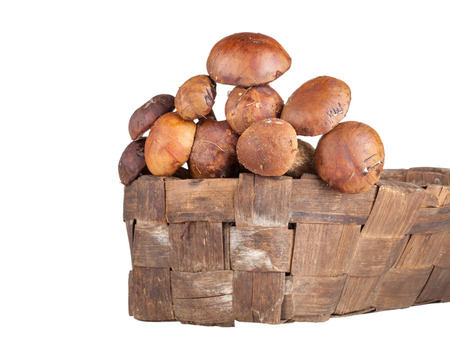 porcini mushrooms lying in a wicker basket isolated on white background. Shallow depth of field photo