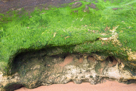 Overgrown by algae stone photo