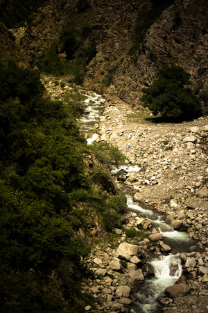 hardwoods: Mountain river. Stones. Green plants. Toned. Dramatic.