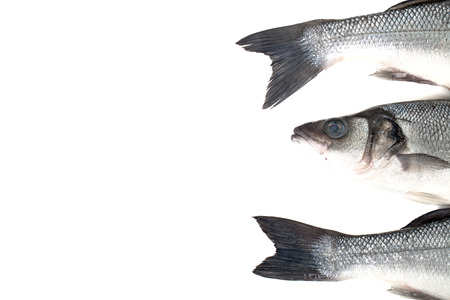 Three fresh sea bass on a light background. Head and two tails. With space for text photo