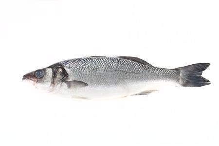 codfish: fresh sea bass on a light background