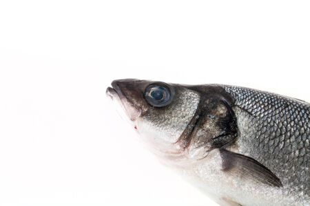 silver perch: fresh sea bass on a light background
