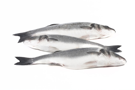 silver perch: Three fresh sea bass on a light background. Stock Photo