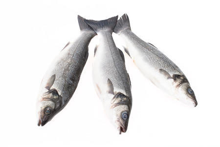 silver perch: Three fresh fish on a light background. With space for text