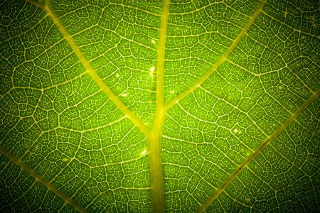 Texture leaf on clearance. tinted Standard-Bild