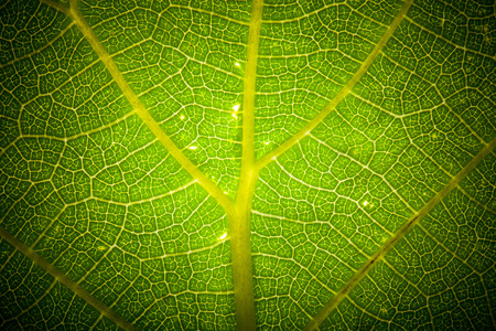 Texture leaf on clearance. tinted Imagens