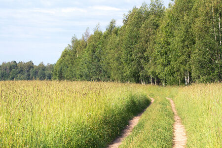 outskirts: Road in a field on the outskirts of the forest. Stock Photo