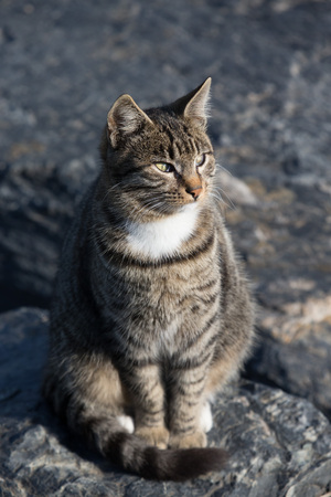 granit: Homeless cat on the granit waterfront in Istanbul.