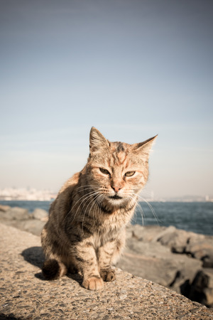 granit: Homeless cat on the granit waterfront in Istanbul. Toned. Stock Photo