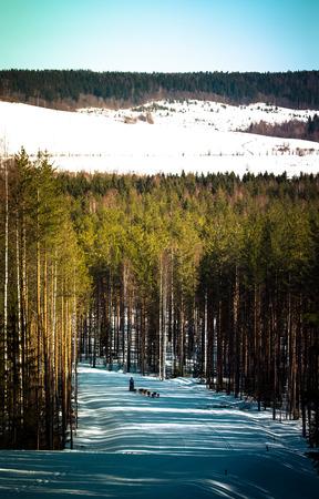 Race op honden op het spoor in het winterbos. Afgezwakt. Stockfoto