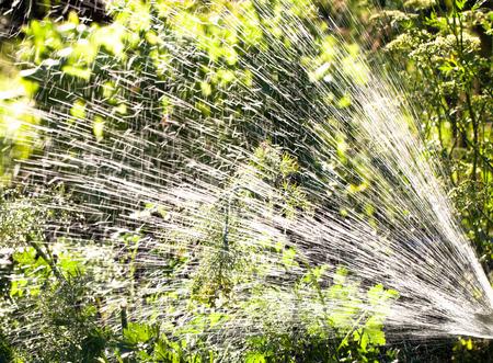 garden fountain: Splashes of water from a hose in the summer garden. Fountain. Stock Photo