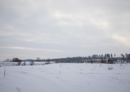 Winter snowy landscape. Background of forest and sky. photo