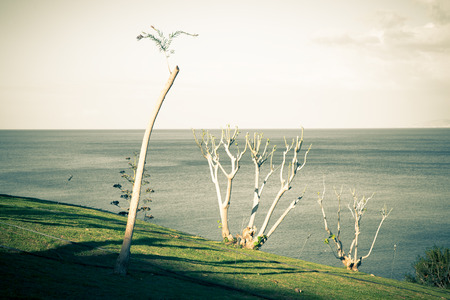 polis: Trimmed trees on the slope near the sea. Polis, Cyprus. Stock Photo