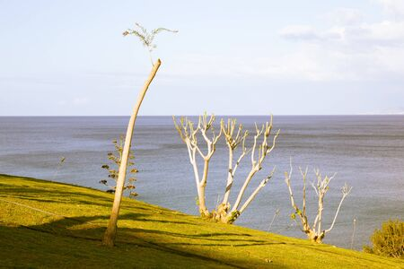 polis: Trimmed trees on the slope near the sea. Polis, Cyprus. Stock Photo