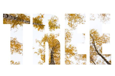 Word TREE over trees with yellow leaves against the sky. Bottom view. Autumn. Stock Photo
