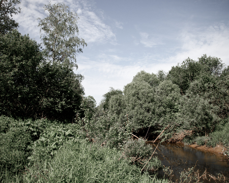 thickets: small forest river in dense thickets Stock Photo