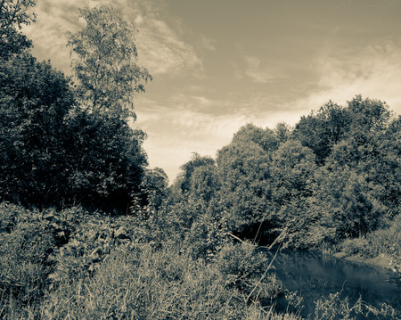 thickets: small forest river in dense thickets under blue skies. tinted