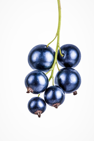 black currants: Black currants isolated on white