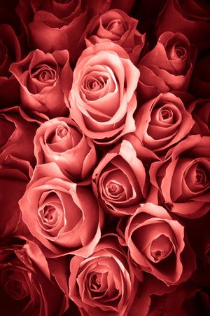 Natuurlijke achtergrond van rozen