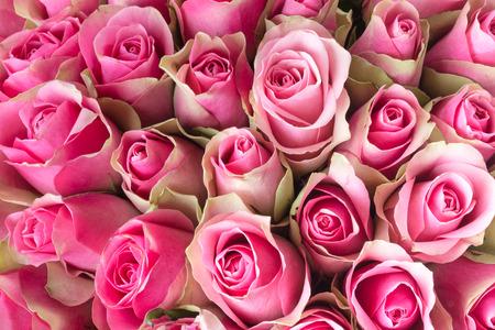 Natürlichen Rosen Hintergrund