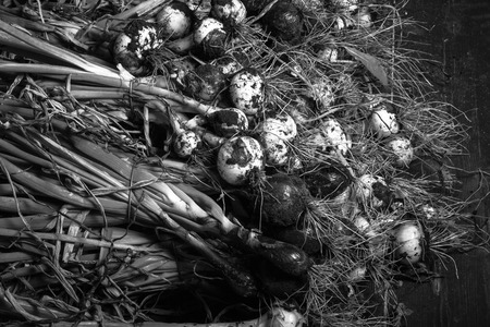 freshly picked: Freshly picked crop of onions. background. monochrome Stock Photo