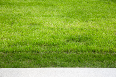 field depth: Green grass on the lawn. Selective focus. Shallow depth of field.