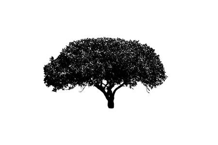 depressive: Tree silhouette on white background.