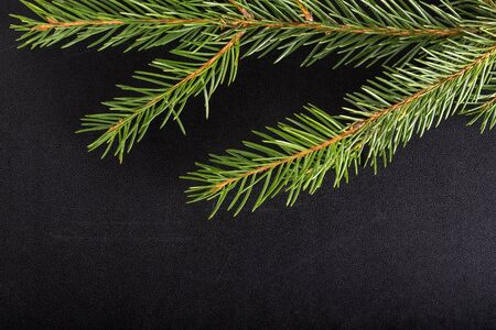 billet: Green fresh branch of Cristmas tree on a black background. Billet for postcard. Stock Photo