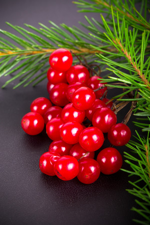 billet: Bright red juicy berries of viburnum and green fresh branch of Cristmas tree on a black background. Billet for postcard. Toned.