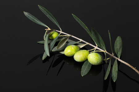 sun oil: Branch of olive tree with green olive berries on a black wooden table or board.