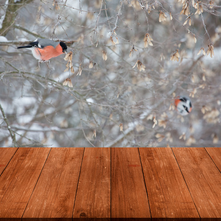 gangway: Bullfinches on a tree branch. View from dark wooden gangway, table or bridge. Collage. Selective focus. Stock Photo