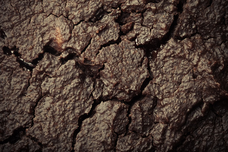 full of holes: The surface of fresh chocolate biscuit for background. Toned. Stock Photo