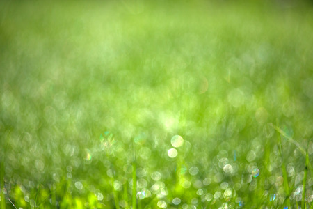 Green grass with dew. Blurred natural background. Shallow depth of field. Selective focus. Stock Photo
