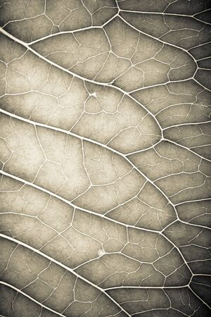 cell growth: Texture of fresh green leaf for natural background. Toned.