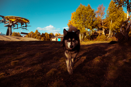 svaneti: Cableway, dog and beautiful autumn mountain landscape in Svaneti. Georgia. Toned.