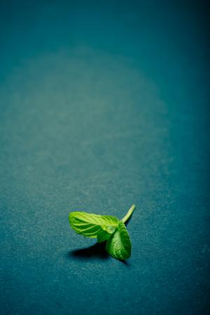 lemongrass tea: Peppermint leaf on the black slate background. Shallow depth of field. Toned. Stock Photo