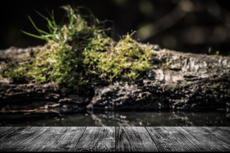 decomposition: The old log with moss on a pond in the woods. View from wooden table. Selective focus. Toned.