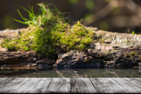The old log with moss on a pond in the woods. View from wooden table. Selective focus.
