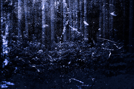 Winter in the forest. Fantasy art processing of photos for a collage. Toned.