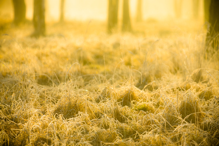 Hoarfrost on the grass at dawn in the forest. Toned.