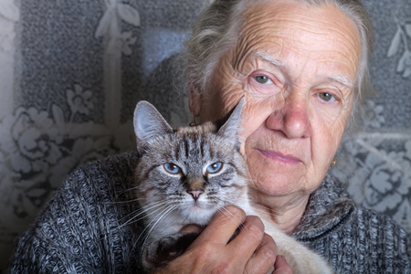 grayness: Elderly woman with cat in rustic interior. Stock Photo