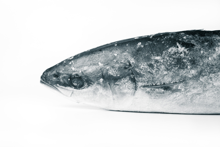 Frozen fish on a white background. Toned.