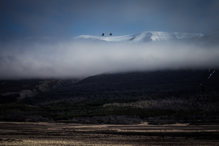 Incredible low clouds over the field with last years grass on the stony rocky desert landscape of Iceland. Toned.