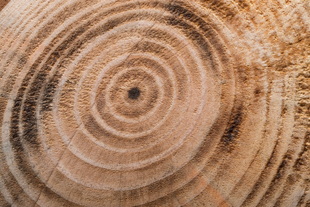 Wooden burned rustic texture for background. Round pattern on a  wooden board.