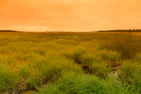 Summer landscape of Sakhalin island. Toned.
