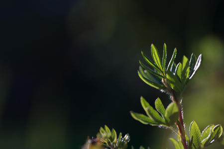 Small green branch in the garden on a blured background. Shallow depth of field. Selective focus. Stock Photo