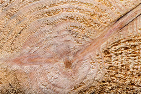 Old wooden board or tree for background. Space for text. Stock Photo